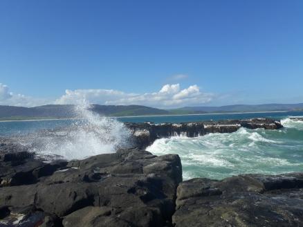 Curio Bay (4)