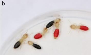 termite (2).jpg